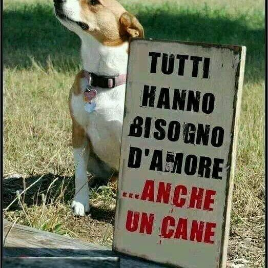 Accudire cani ferie o weekend pisogne